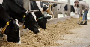 Conheça as diferenças entre pecuária intensiva e extensiva
