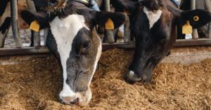 Pecuária intensiva tecnologia e melhoramento genético na criação do gado